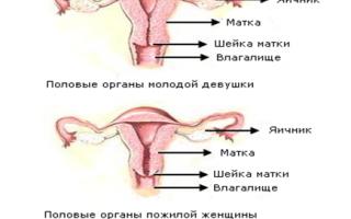 Какая должна быть матка при менопаузе