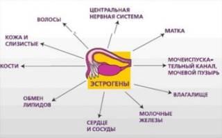 Как восполнить дефицит эстрогена при климаксе