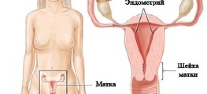 Лечение аденомиоза в менопаузе народными средствами