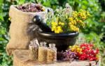 Народные рецепты трав при климаксе